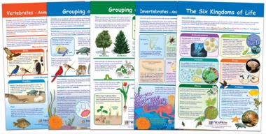The Six-Kingdoms of Life Bulletin Board Chart Set of 5, Gr. 3-5