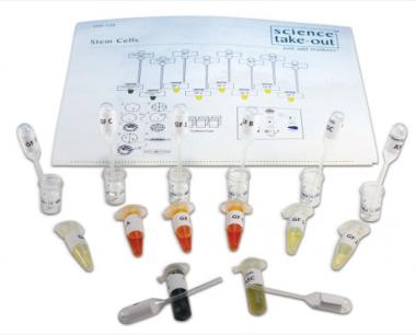 Stem Cells Lab Investigation