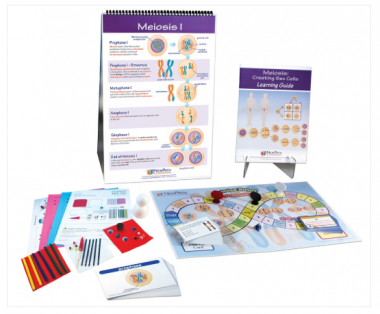 Meiosis Curriculum Learning Module